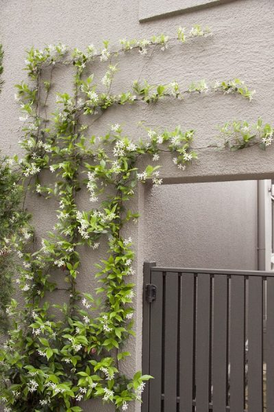 classy feature wall with a flowering creeper